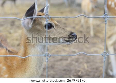 deer in prison  - stock photo