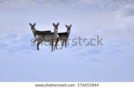 Deer in snow environment, textured conceptual image - stock photo