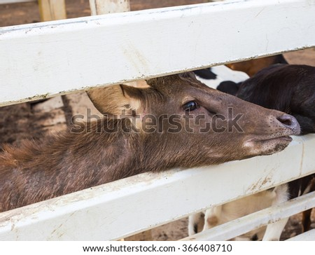Deer in stall - stock photo