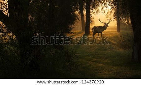 Deer in sunset in the forest - stock photo