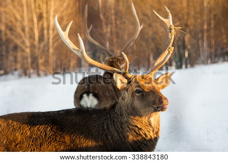 Deer in the Park outdor winter day - stock photo