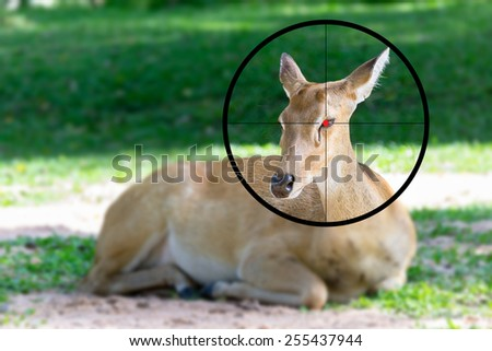 Deer in the shooting range - stock photo