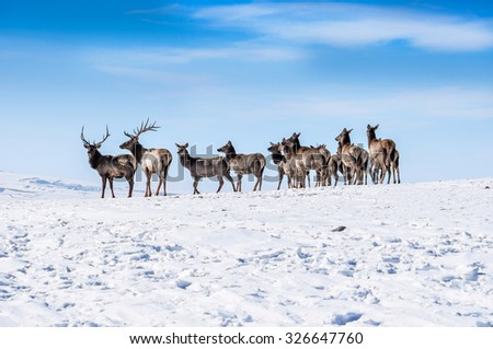Deer in the snow - stock photo