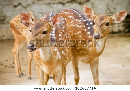 Deer in the zoo. - stock photo