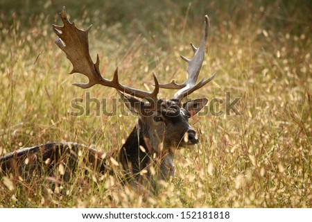 deer mammal - stock photo