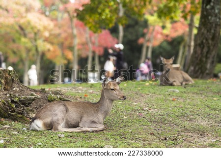 Deer near Todaiji temple in Nara, Japan.