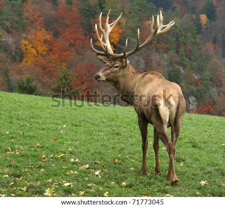 deer on autumn background. - stock photo