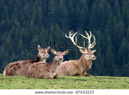deer on autumn background - stock photo