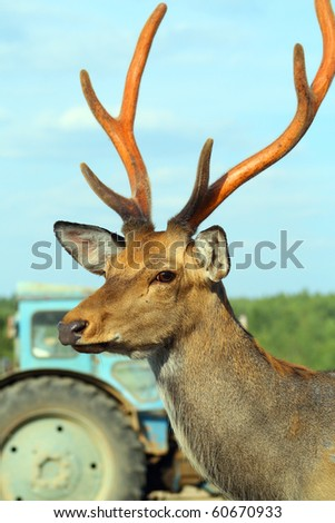 Deer on farm - stock photo