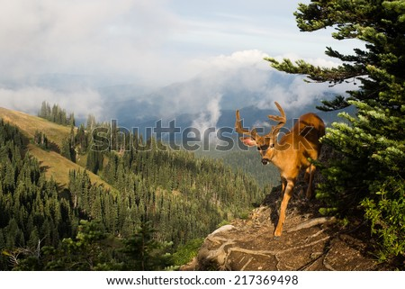 Deer on Sunrise Point Trail - stock photo