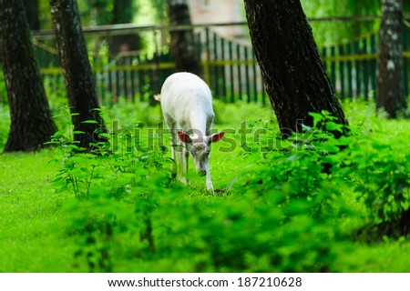 deer on the green grass on the edge of the forest - stock photo