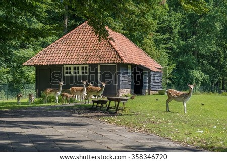 Deer on the pasture - stock photo
