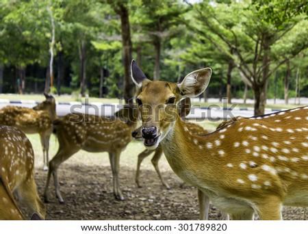 Deer patterned lovely spot deer in the wild - stock photo