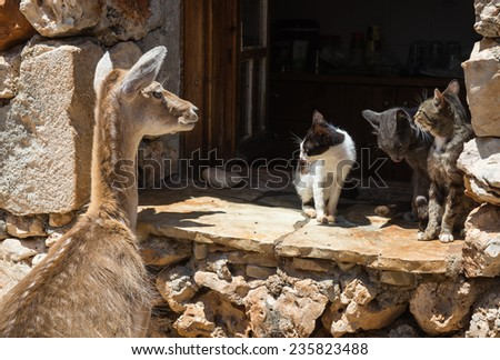 Deer peeping in the window and three cats on a sill, Zakinthos,  - stock photo