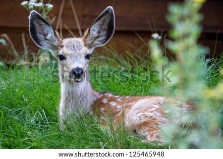 Deer Resting - stock photo