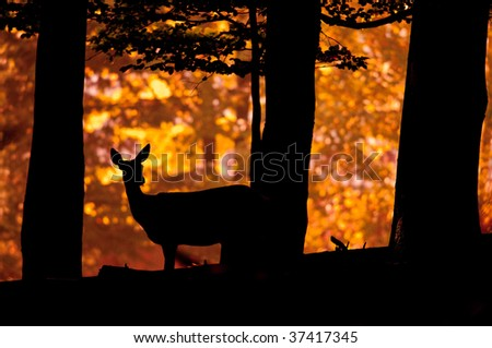 Deer silhouette in sunset