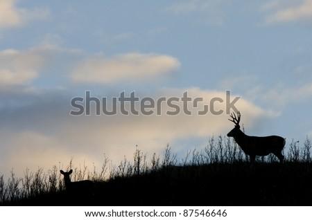 Deer Silhouette Saskatchewan Canada Mule Deer Hills - stock photo