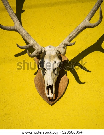 deer skull - stock photo