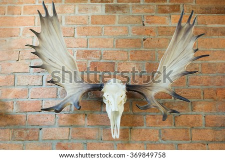 Deer skull hanged on orange bricks wall - stock photo