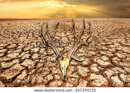 deer skull on drought land and cracked earth in sunrise with climate change and global warming