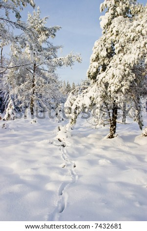 Deer tracks in the snow - stock photo