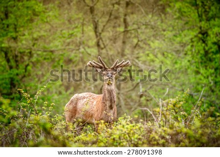 Deer with antlers in a green forest - stock photo