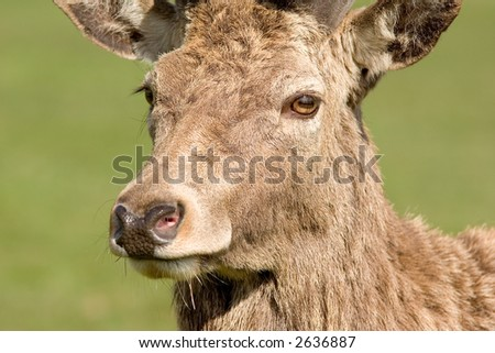 Deers Head - stock photo