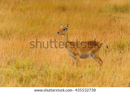 Deers  in the grass