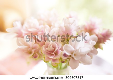 Defocus and soft focus pink blossom, delicate floral background with copy space