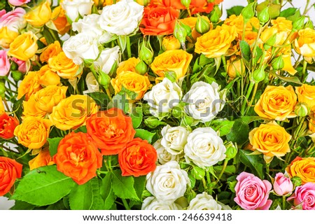 Defocus big bunch of beautiful flowers. A lot of multicolored roses - floral background - stock photo