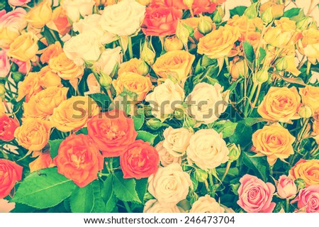 Defocus big bunch of beautiful pastel flowers. A lot of multicolored roses - floral background - stock photo