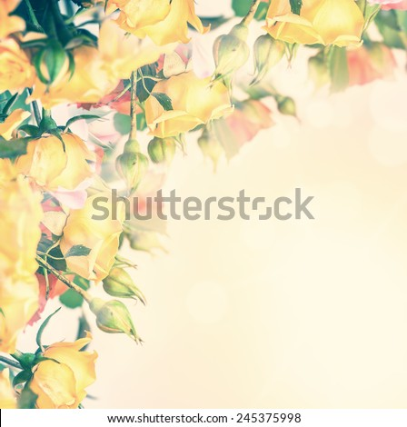 Defocus blur pastel flowers - roses on sunrise background with color filters - stock photo