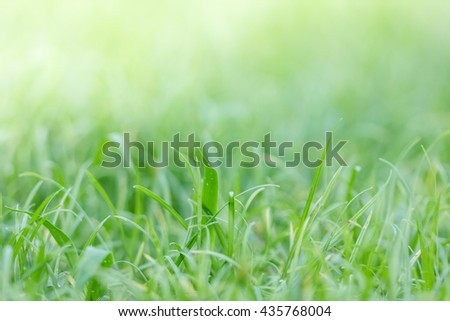 defocus grass filed background, green nuture background
