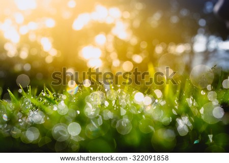 Defocus of Green grass with bokeh for background - stock photo