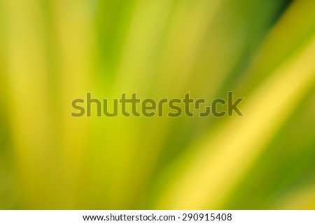 defocus of green leaf use for background - stock photo