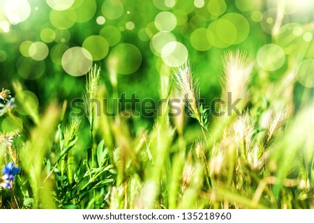 defocus Spring or summer abstract nature background with grass and ears in the meadow and blue sky in the back - stock photo