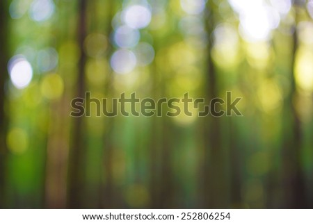 Defocused light of heaven and the sun's rays make their way through the outlines of the trees in the forest - stock photo
