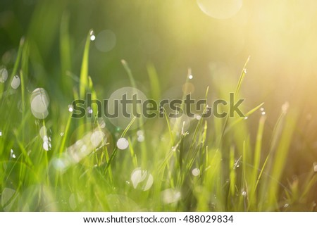 Defocused: morning dew on grass. Toned and sunlight. No focus.