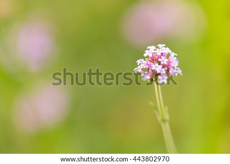 defocused of spring flowers with blurred background. macro shot with copy space. - stock photo