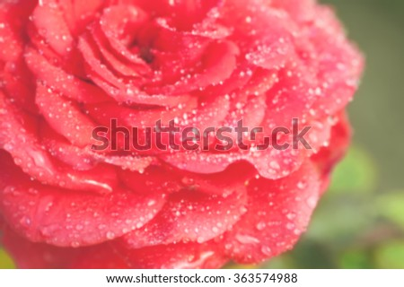 Defocused red rose petals covered by water drops against green leafs abstract background - stock photo