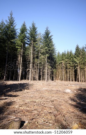 Deforestation and empty spaces in a dark forest in Germany - stock photo