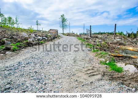 Deforestation area with dirt road - stock photo