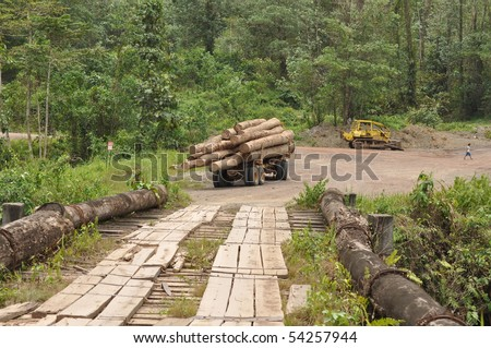 deforestation Borneo