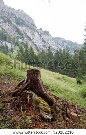 Deforestation concept with a tree stump in a green forest, Switzerland - stock photo