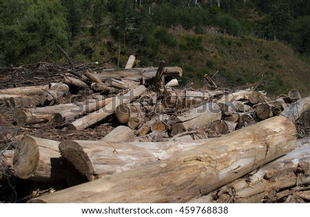 Deforestation, Cutt Trees on the ground with live forest on background. Rainforest deforestation exposure