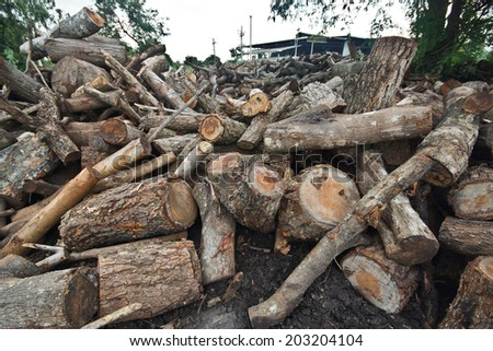 deforestation - cutting down trees  - stock photo