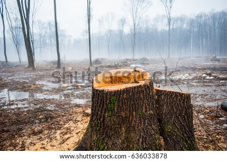 Consumer Goods and Deforestation