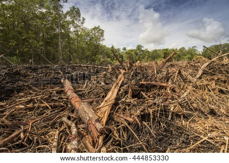 Deforestation environmental damage - tropical rain forest destroyed to make way for palm oil plantations. - stock photo