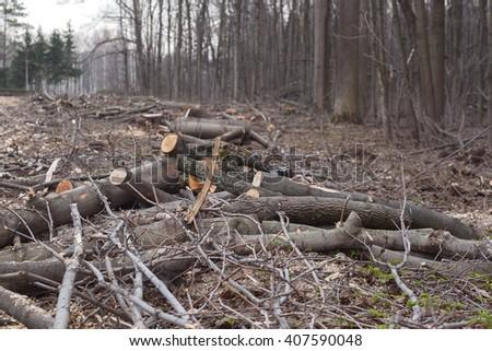 deforestation environmental disaster - stock photo