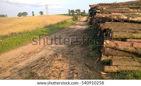 Deforestation: forest has been destroyed by human development, trees felled and stored for the industry. Wooden logs cut and stacked.